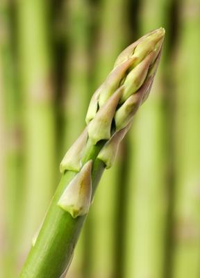 Fresh Asparagus is a good source of folate